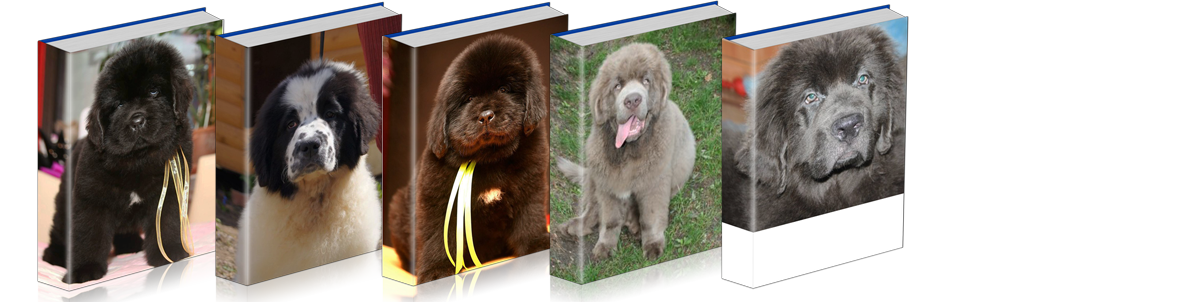 different colored Newfoundlands